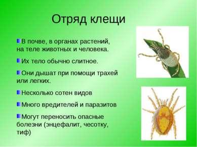 Отряд клещи В почве, в органах растений, на теле животных и человека. Их тело...