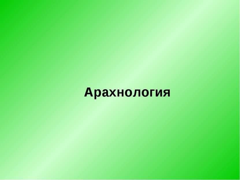 Арахнология