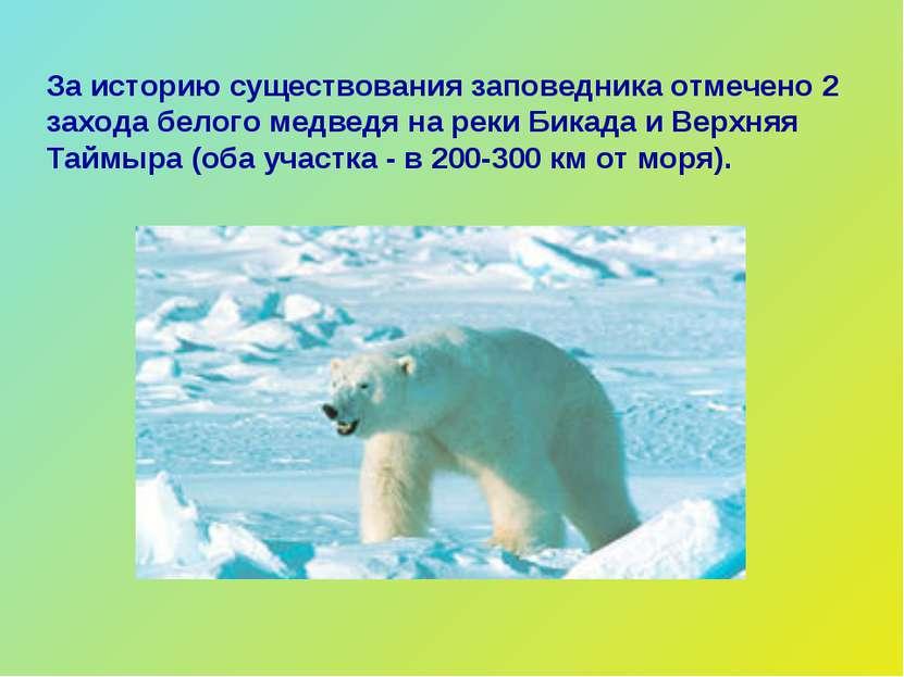 За историю существования заповедника отмечено 2 захода белого медведя на реки...