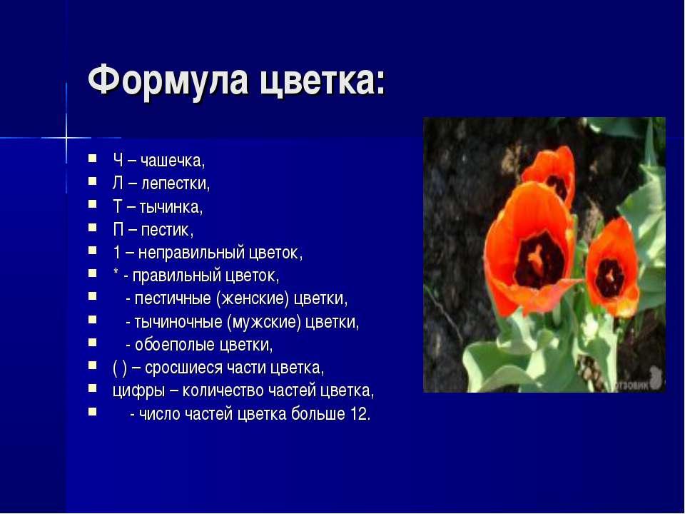Формула цветка: Ч – чашечка, Л – лепестки, Т – тычинка, П – пестик, 1 – непра...
