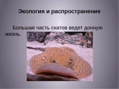 Экология и распространение Большая часть скатов ведет донную жизнь.