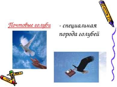 Почтовые голуби - специальная порода голубей