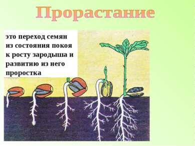 это переход семян из состояния покоя к росту зародыша и развитию из него прор...