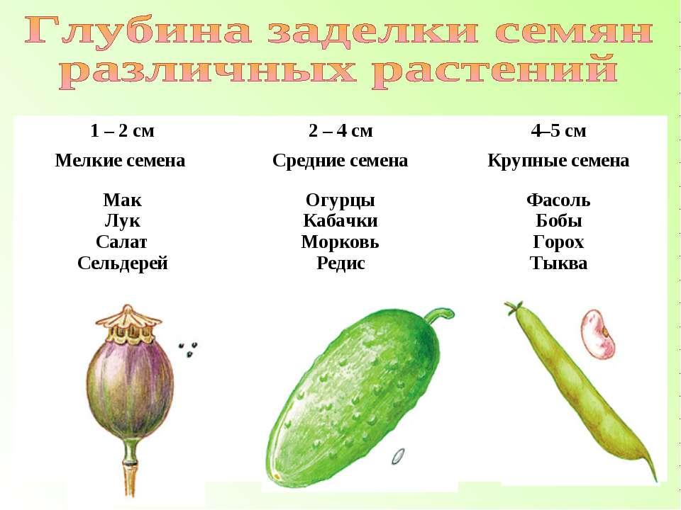 1 – 2 см 2 – 4 см 4–5 см Мелкие семена Средние семена Крупные семена Мак Лук ...