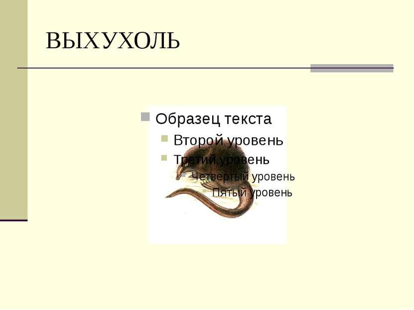 ВЫХУХОЛЬ