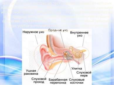 Наш орган слуха состоит из трех отделов, каждый из которых выполняет свою раб...
