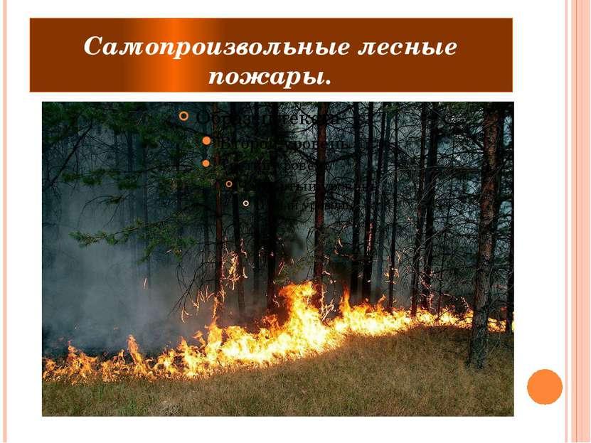 Самопроизвольные лесные пожары.