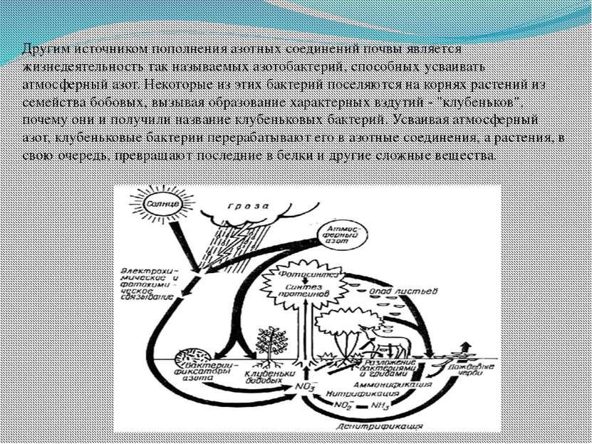 Другим источником пополнения азотных соединений почвы является жизнедеятельно...