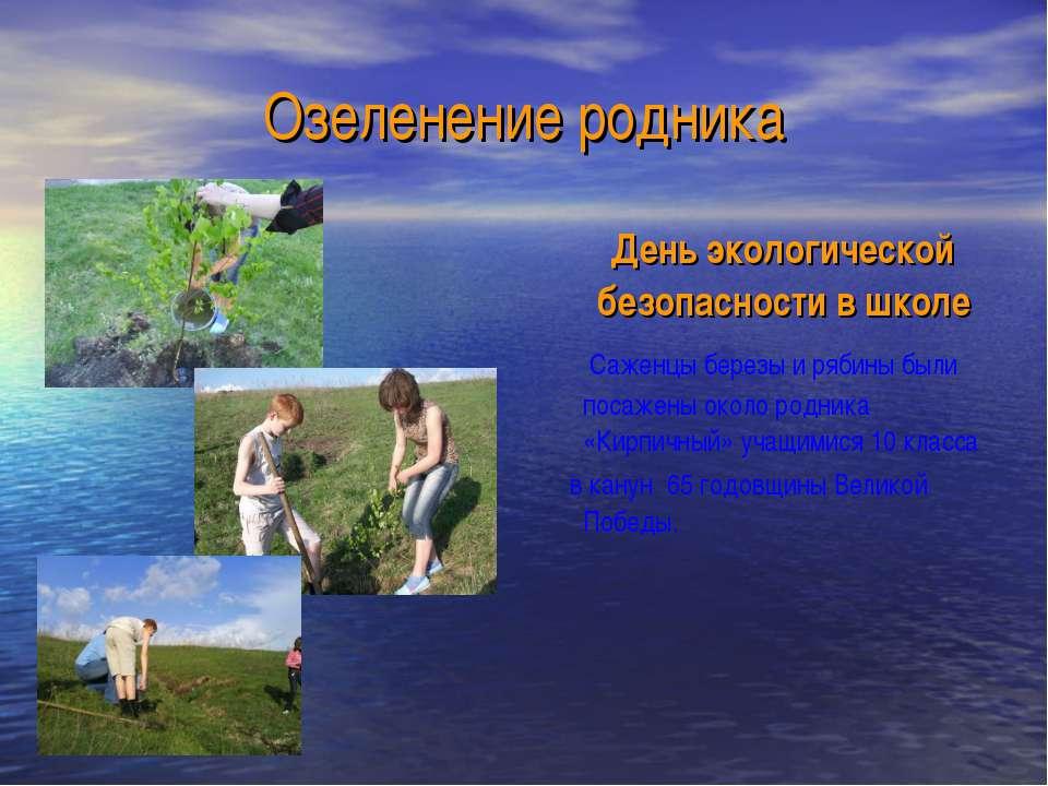 Озеленение родника День экологической безопасности в школе Саженцы березы и р...