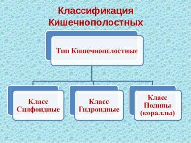 Классификация Кишечнополостных