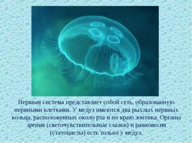Нервная система представляет собой сеть, образованную нервными клетками. У ме...