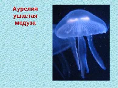 Аурелия ушастая медуза