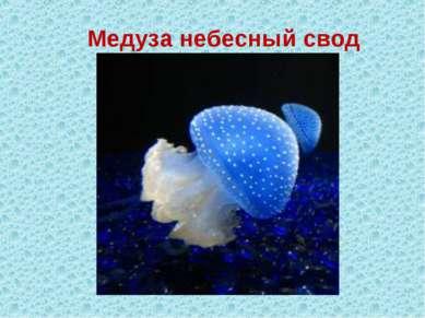 Медуза небесный свод