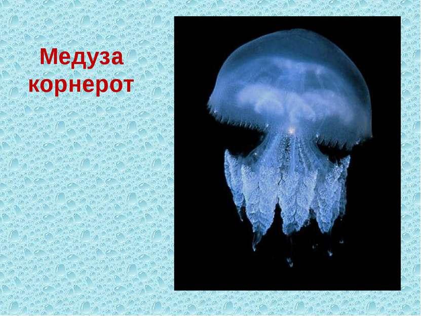 Медуза корнерот