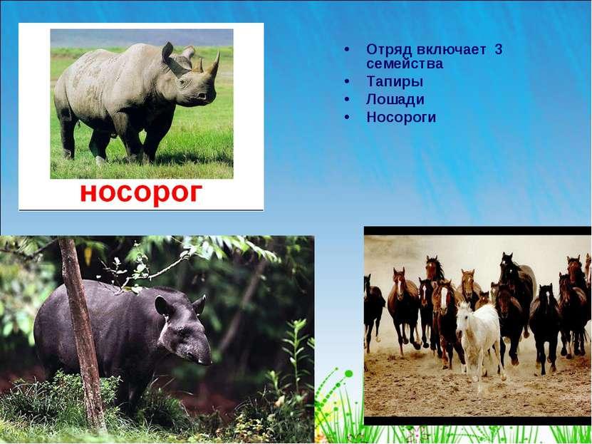 Отряд включает 3 семейства Тапиры Лошади Носороги