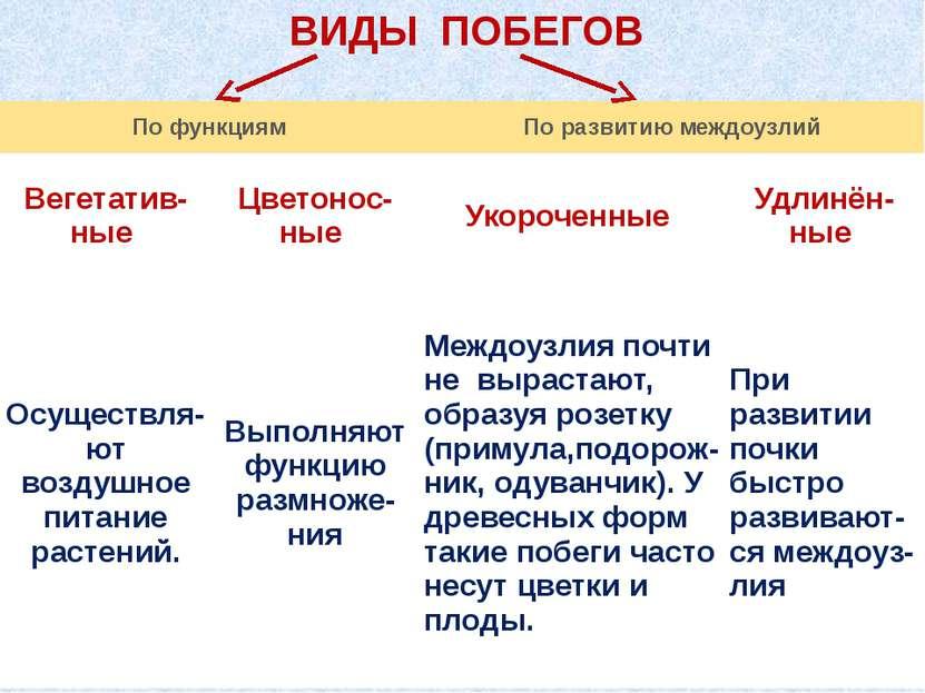 ВИДЫ ПОБЕГОВ По функциям По развитию междоузлий Вегетатив- ные Цветонос- ные ...