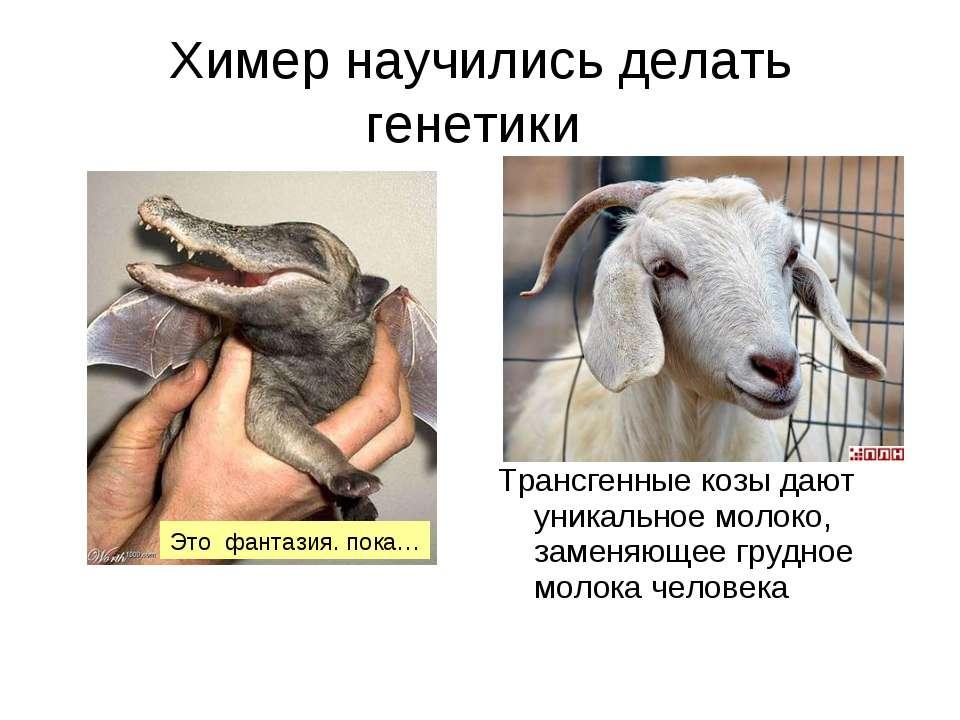 Химер научились делать генетики Трансгенные козы дают уникальное молоко, заме...