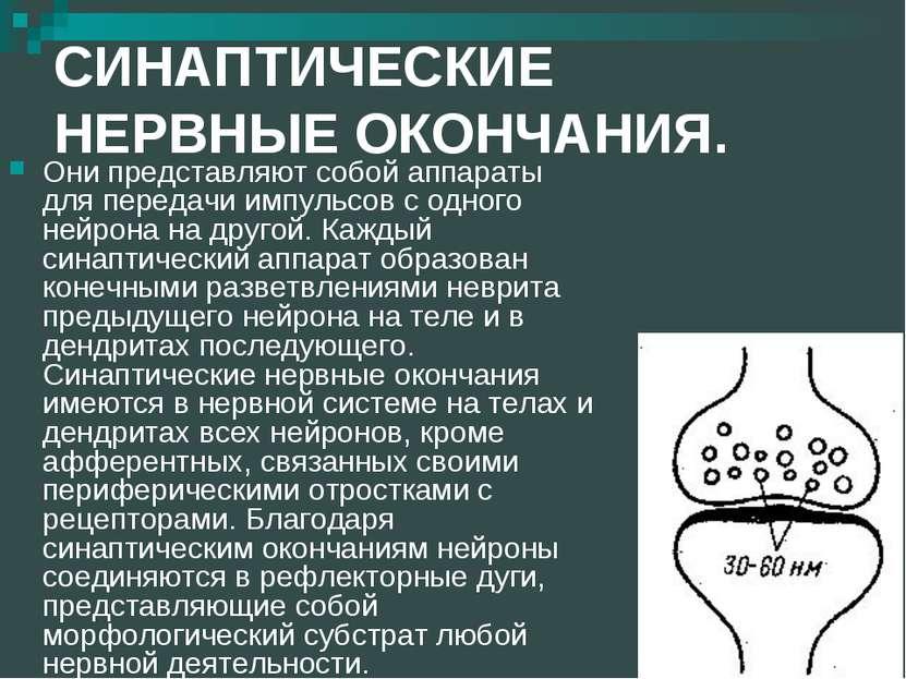 СИНАПТИЧЕСКИЕ НЕРВНЫЕ ОКОНЧАНИЯ. Они представляют собой аппараты для передачи...