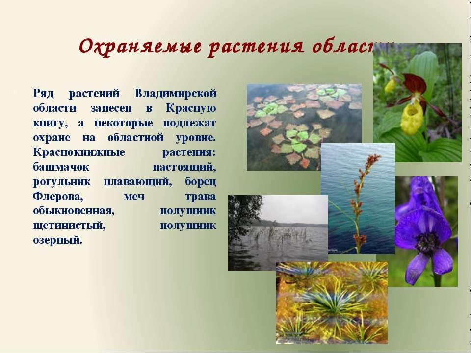 Охраняемые растения области Ряд растений Владимирской области занесен в Красн...