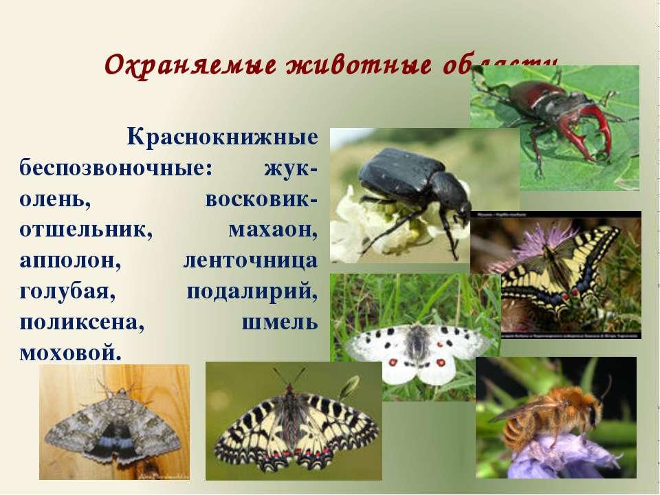Охраняемые животные области Краснокнижные беспозвоночные: жук-олень, восковик...