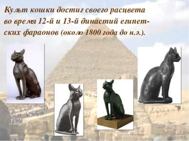 Культ кошки достиг своего расцвета во время 12-й и 13-й династий египет- ских...