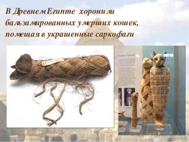 В Древнем Египте хоронили бальзамированных умерших кошек, помещая в украшенны...