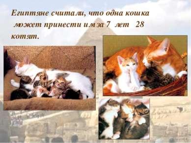 Египтяне считали, что одна кошка может принести им за 7 лет 28 котят.