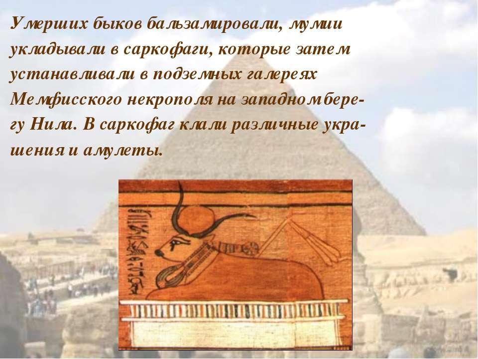 Умерших быков бальзамировали, мумии укладывали в саркофаги, которые затем уст...
