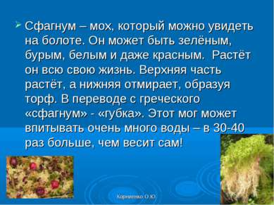 Корниенко О.Ю. Сфагнум – мох, который можно увидеть на болоте. Он может быть ...