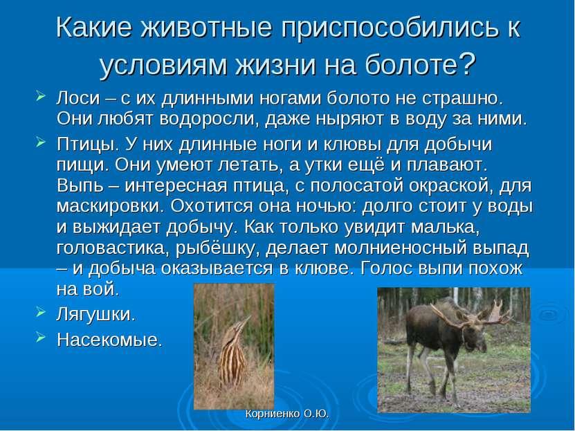 Корниенко О.Ю. Какие животные приспособились к условиям жизни на болоте? Лоси...
