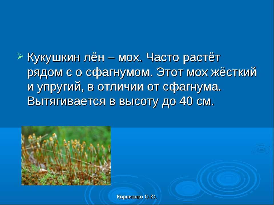 Корниенко О.Ю. Кукушкин лён – мох. Часто растёт рядом с о сфагнумом. Этот мох...