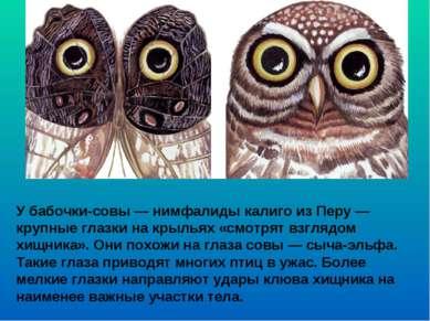У бабочки-совы — нимфалиды калиго из Перу— крупные глазки на крыльях «смотря...