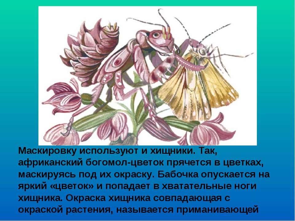 Маскировку используют и хищники. Так, африканский богомол-цветок прячется в ц...