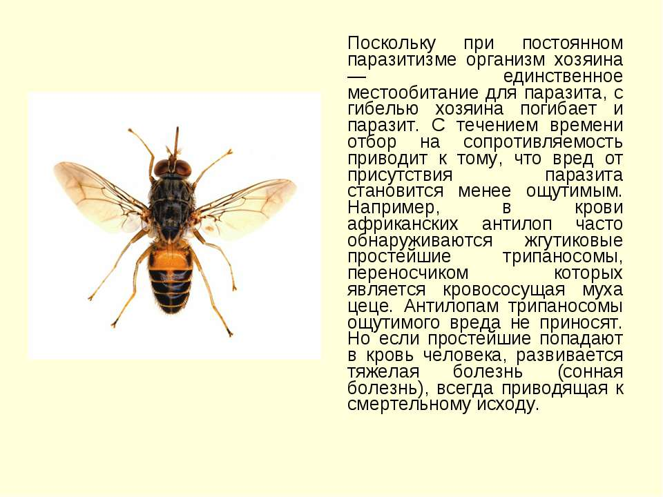 Поскольку при постоянном паразитизме организм хозяина — единственное местооби...