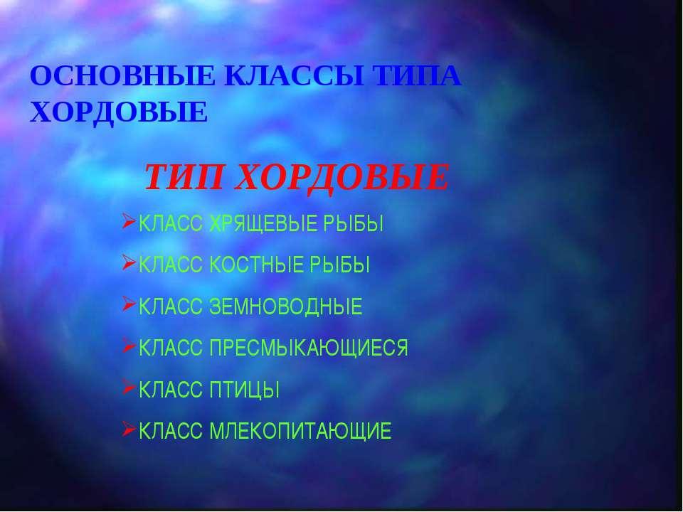 ОСНОВНЫЕ КЛАССЫ ТИПА ХОРДОВЫЕ ТИП ХОРДОВЫЕ КЛАСС ХРЯЩЕВЫЕ РЫБЫ КЛАСС КОСТНЫЕ ...
