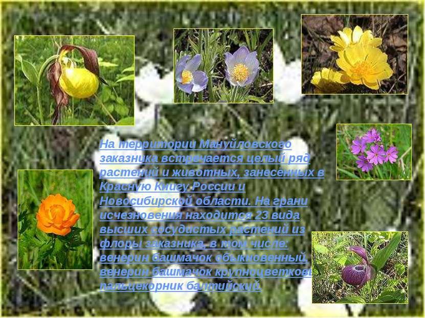 На территории Мануйловского заказника встречается целый ряд растений и животн...