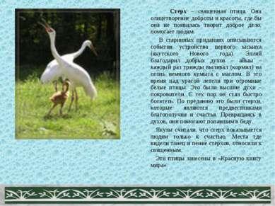 Стерх – священная птица. Она олицетворение доброты и красоты, где бы она не п...