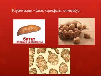 Клубнеплоды – батат, картофель, топинамбур.
