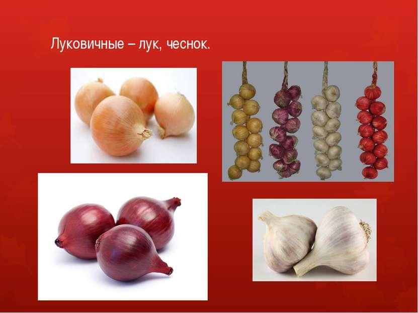 Луковичные – лук, чеснок.