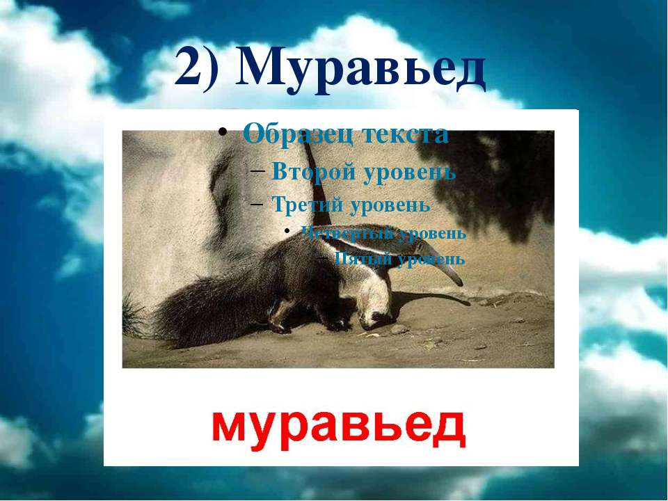 2) Муравьед