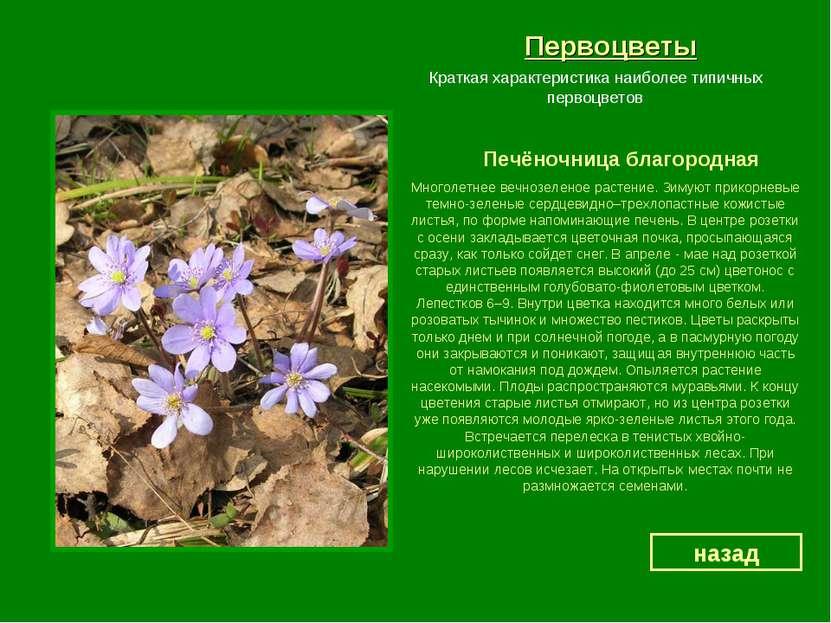 Первоцветы Печёночница благородная назад Краткая характеристика наиболее типи...