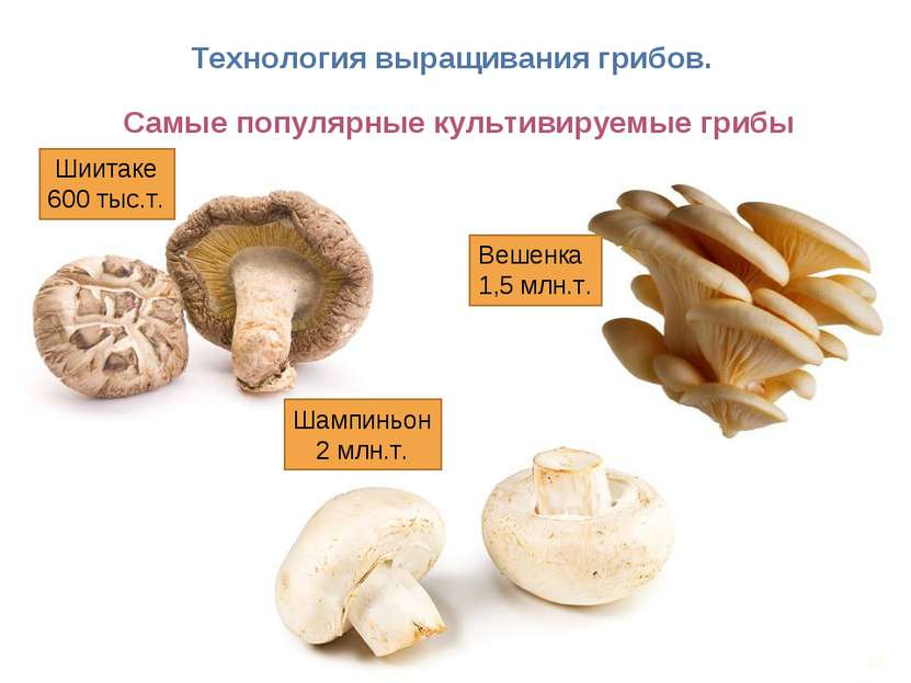 Обучение технологии выращивания грибов 73