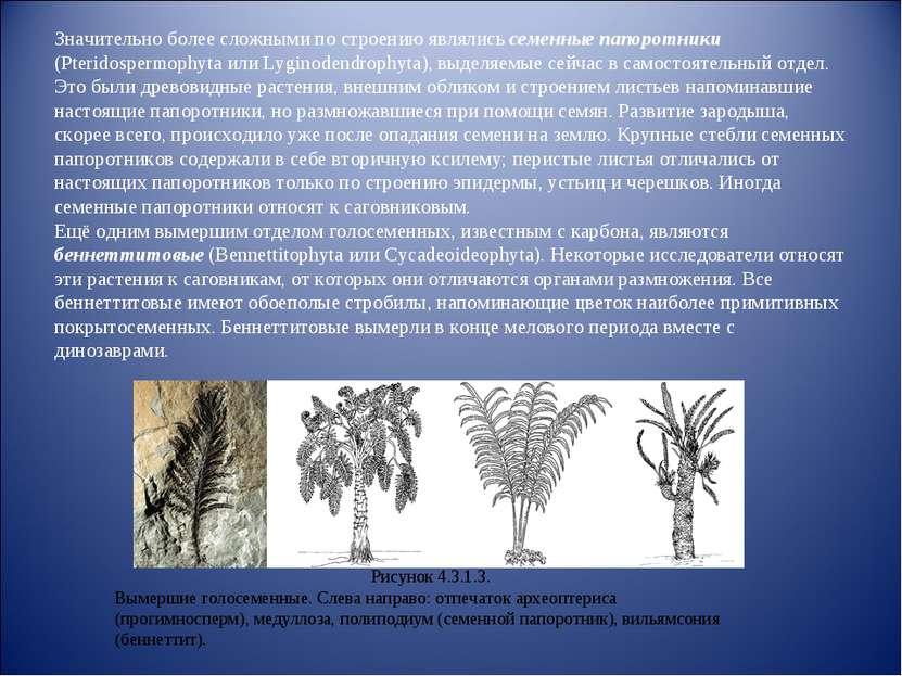 Значительно более сложными по строению являлись семенные папоротники (Pterido...