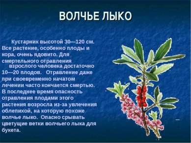 ВОЛЧЬЕ ЛЫКО Кустарник высотой 30—120 см. Все растение, особенно плоды и кора,...