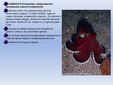 ОСЬМИНОГИ (Octopoda), отряд морских моллюсков класса головоногих. Наиболее из...