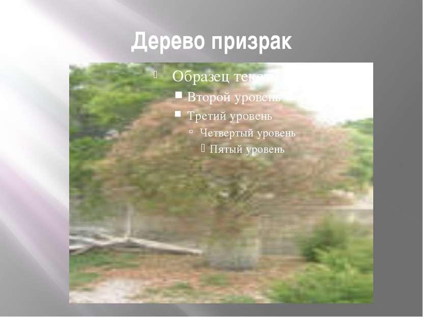 Дерево призрак