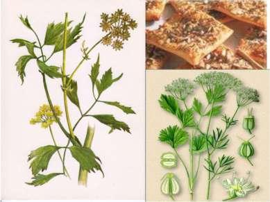 Любисток – лекарственное и пряное растение. Выпечка с тмином. Анис.