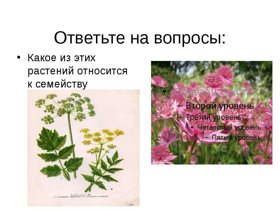Ответьте на вопросы: Какое из этих растений относится к семейству зонтичные?