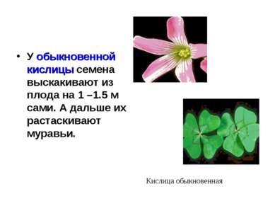 У обыкновенной кислицы семена выскакивают из плода на 1 –1.5 м сами. А дальше...