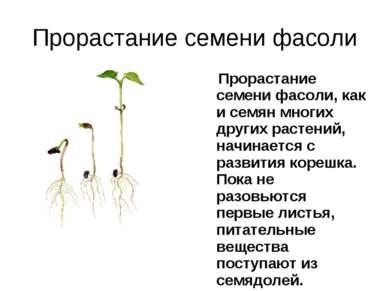 Прорастание семени фасоли Прорастание семени фасоли, как и семян многих други...